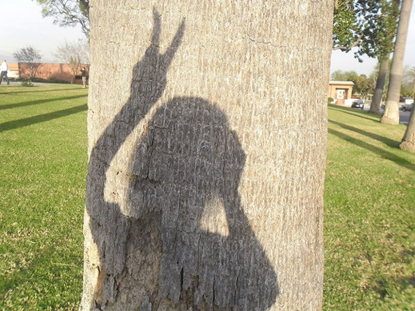 Shadow-of-girl-on-tree